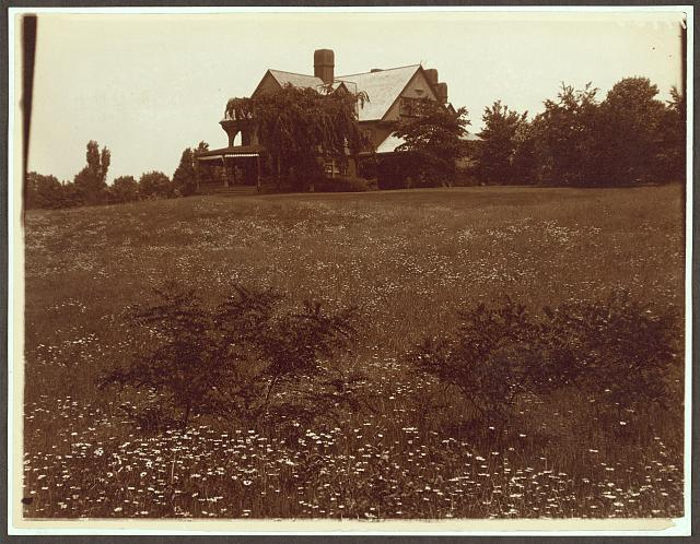 Photograph showing house surrounded by field of daisies at Sagamore Hill. 1904
